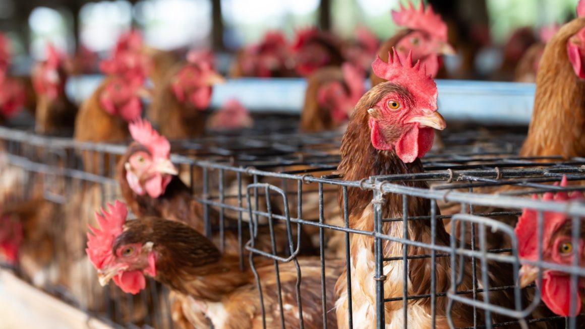 Référendum pour les animaux : je dis OUI