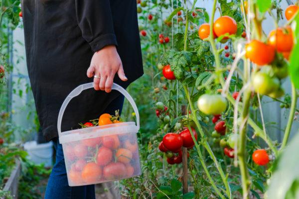 L'appel à projets « Quartiers Fertiles » : une initiative ambitieuse pour développer l'agriculture urbaine