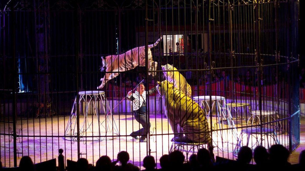 De nouvelles mesures pour le bien-être animal : fin progressive des élevages de visons et des animaux sauvages dans les cirques